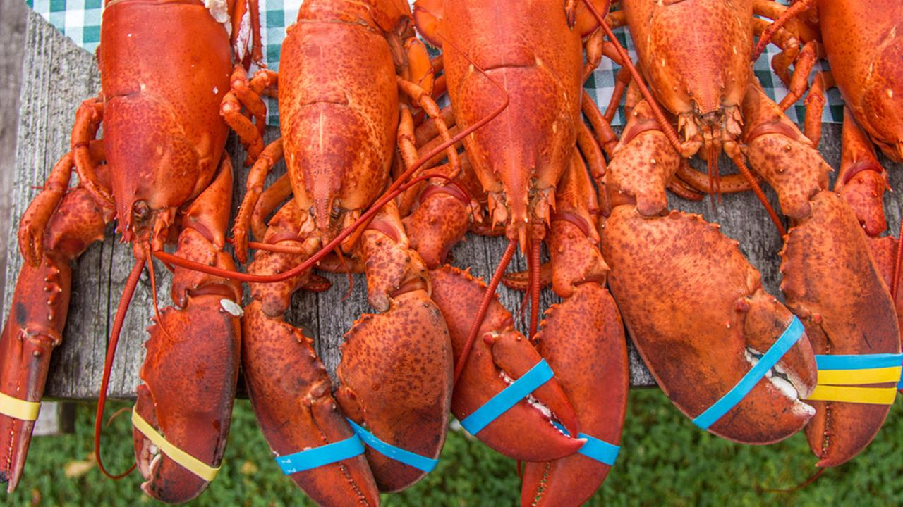 Illegally harvested lobsters donated to homeless veterans in Massachusetts
