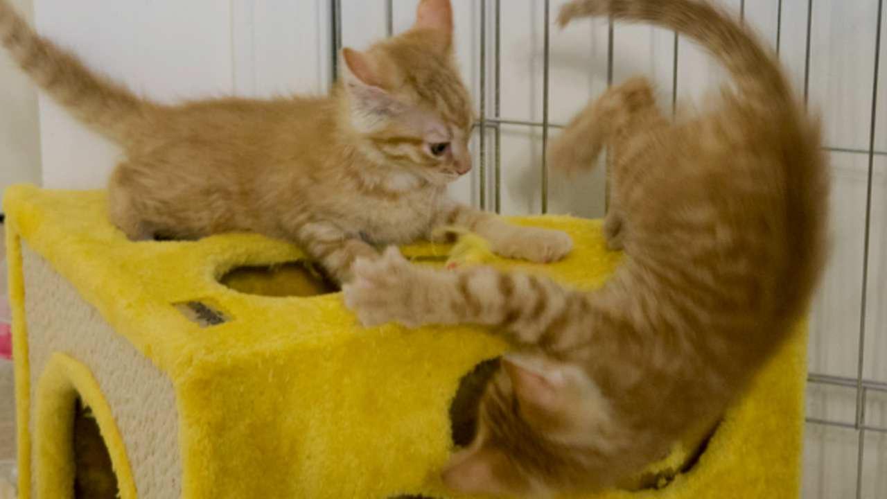 KITTEN CAM: Cuteness overload! Watch kittens LIVE