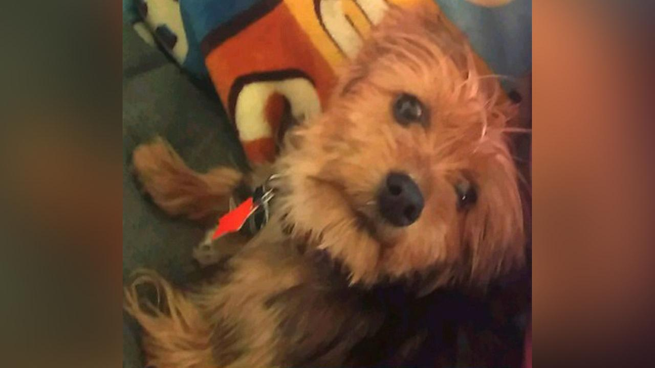 Prosecutor: Man killed roommate's dog by kicking it down stairs on Staten Island