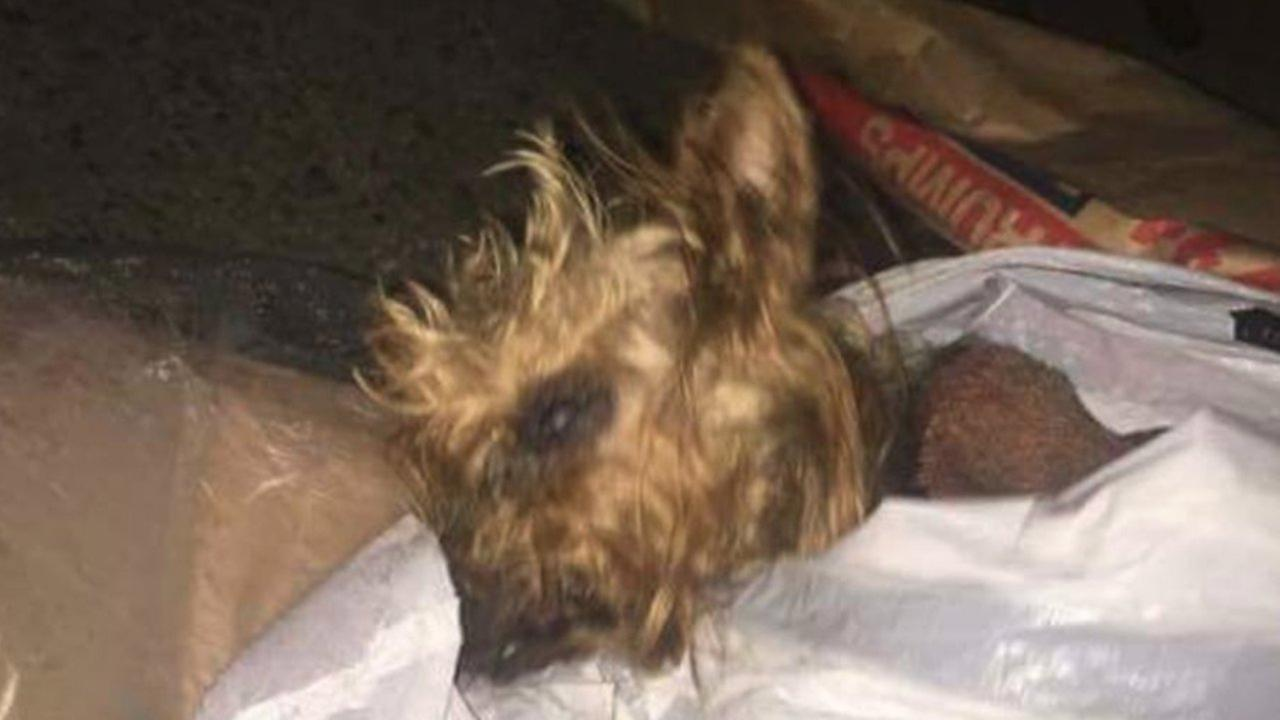 Little dog found wrapped in trash bag in Staten Island dumpster dies