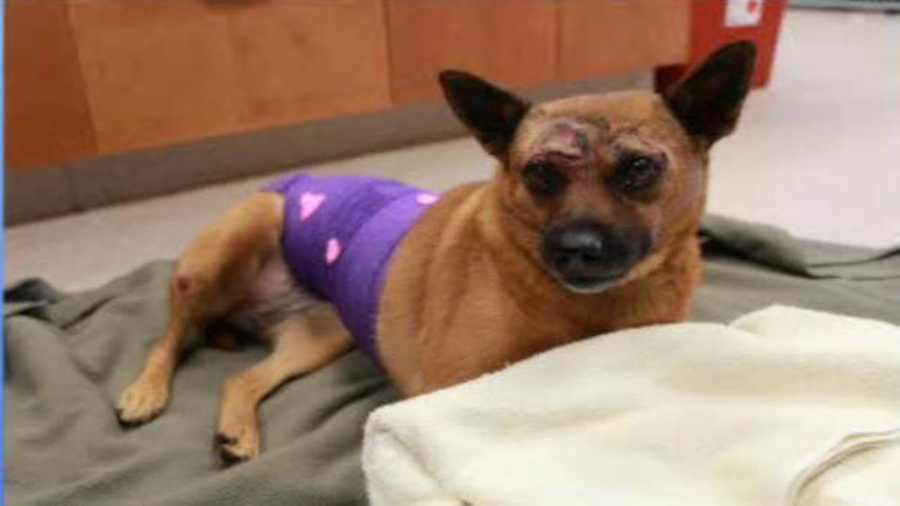 Dog thrown from car on Garden State Parkway leaves hospital