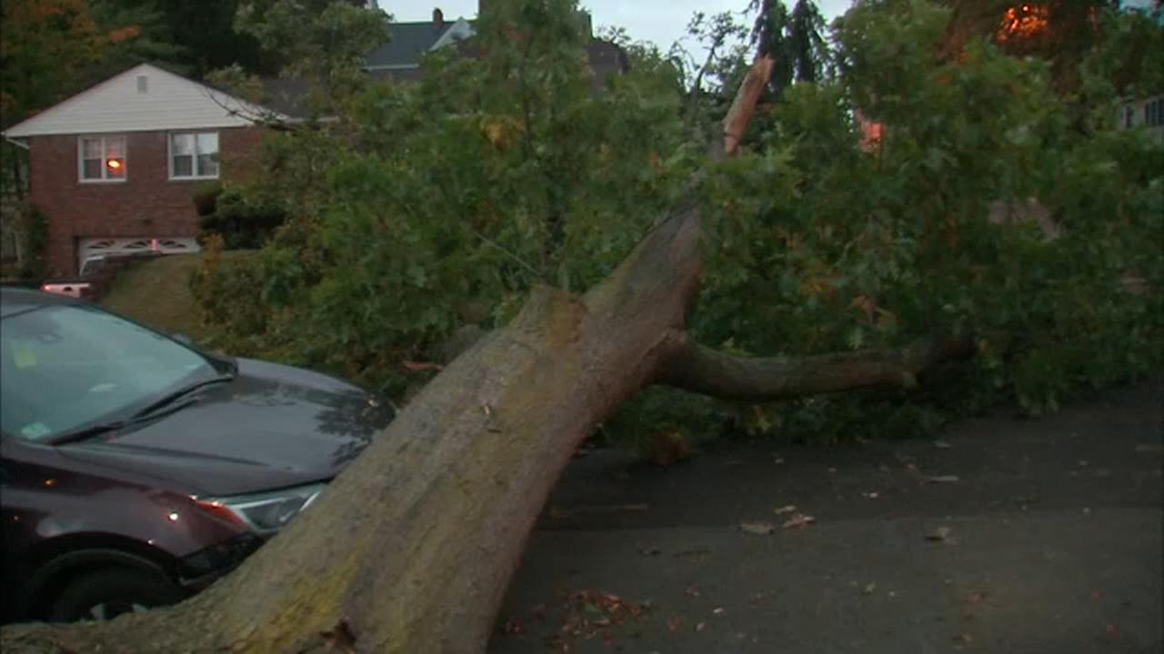 High winds brought down a tree in Passaic, NJ.
