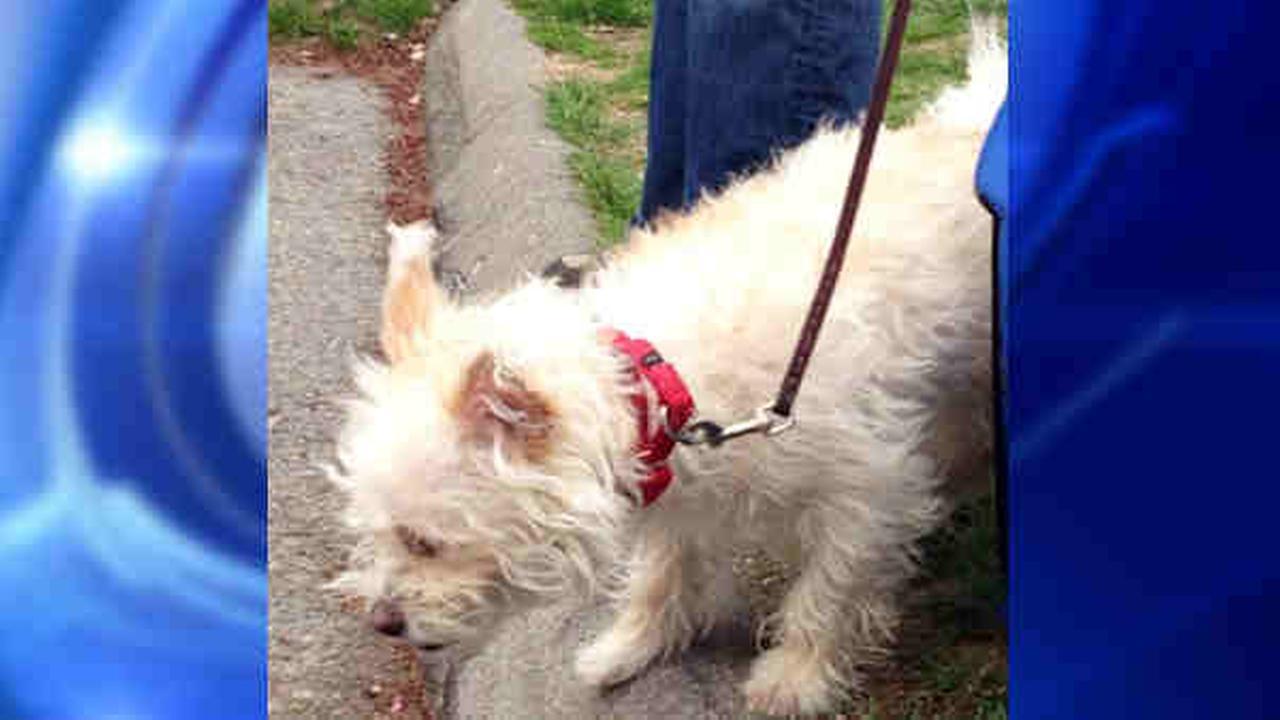 abandoned dog in westchester