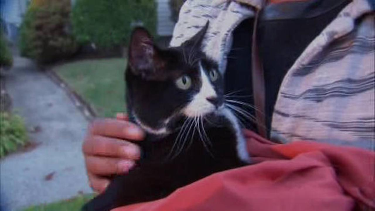 Cat rescued after being stuck in tree in Queens for a week