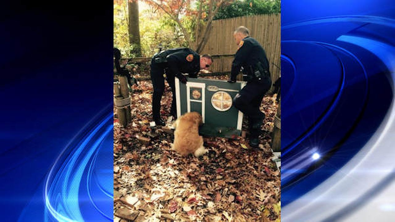 Suffolk county police rescue dog golden retriever stuck in cat house in medford