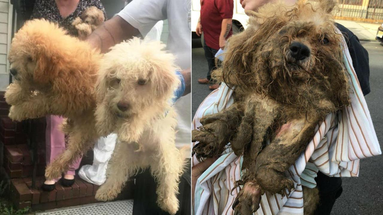 Dogs rescued from Chetwood Street (left) and a dog rescued from Fulton Street (right).