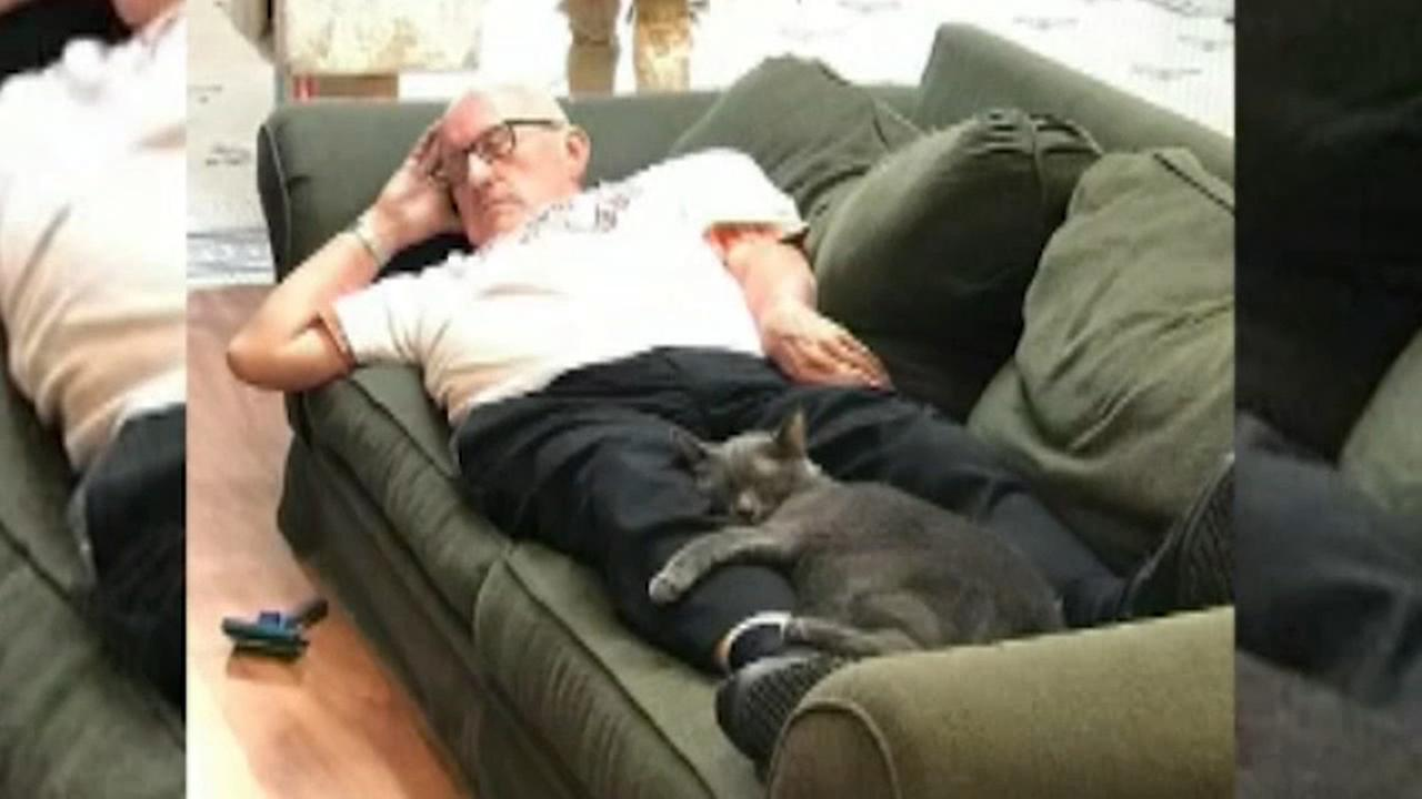 Retired teacher goes viral for napping with shelter cats