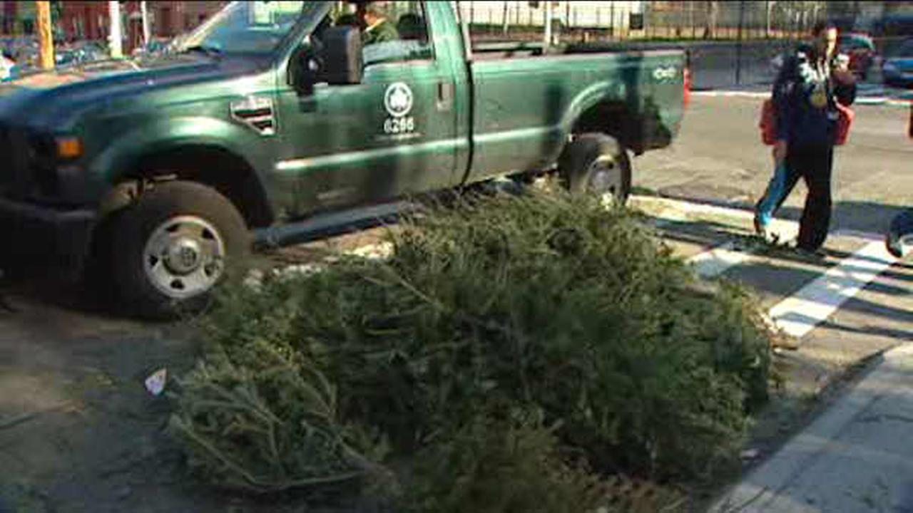 """NYC begins """"Tree-cycling"""" program for Christmas Trees"""