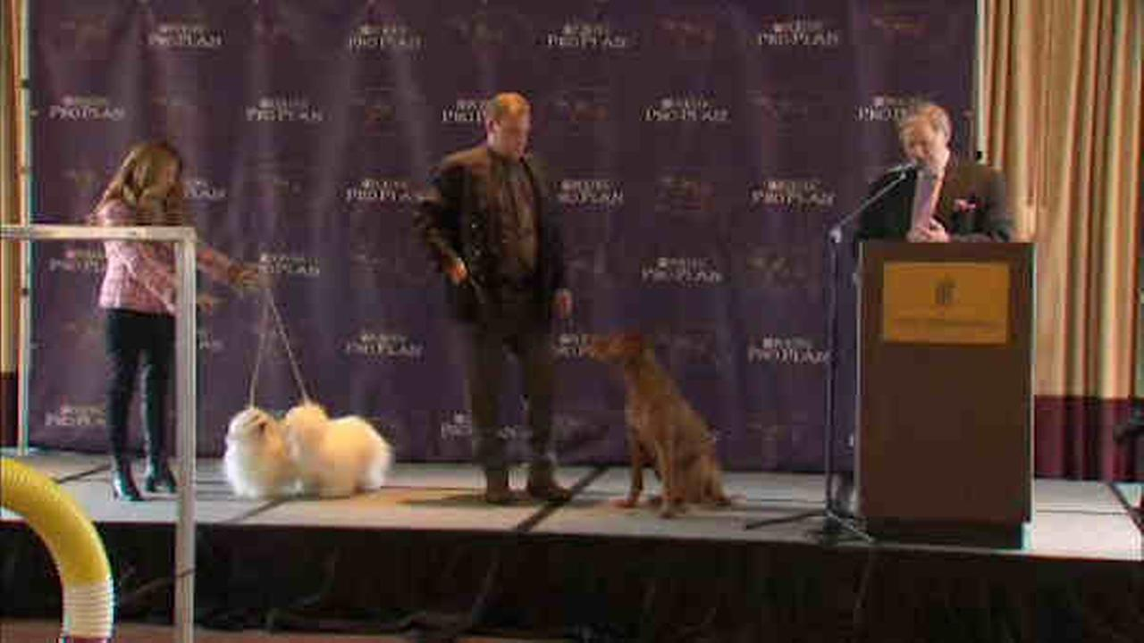 New breeds recognized at Westminster Dog Show