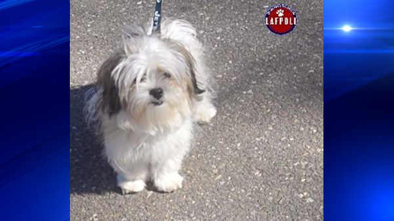 Missing dog found safe on Long Island after surviving storm and frigid weather