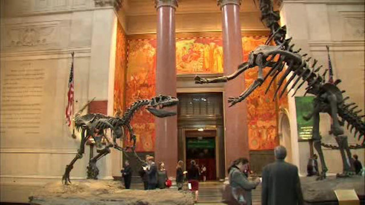 Museum of Natural History gift shop to feature Etsy-created items