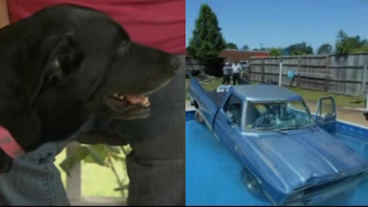 Dog drives Dodge into swimming pool