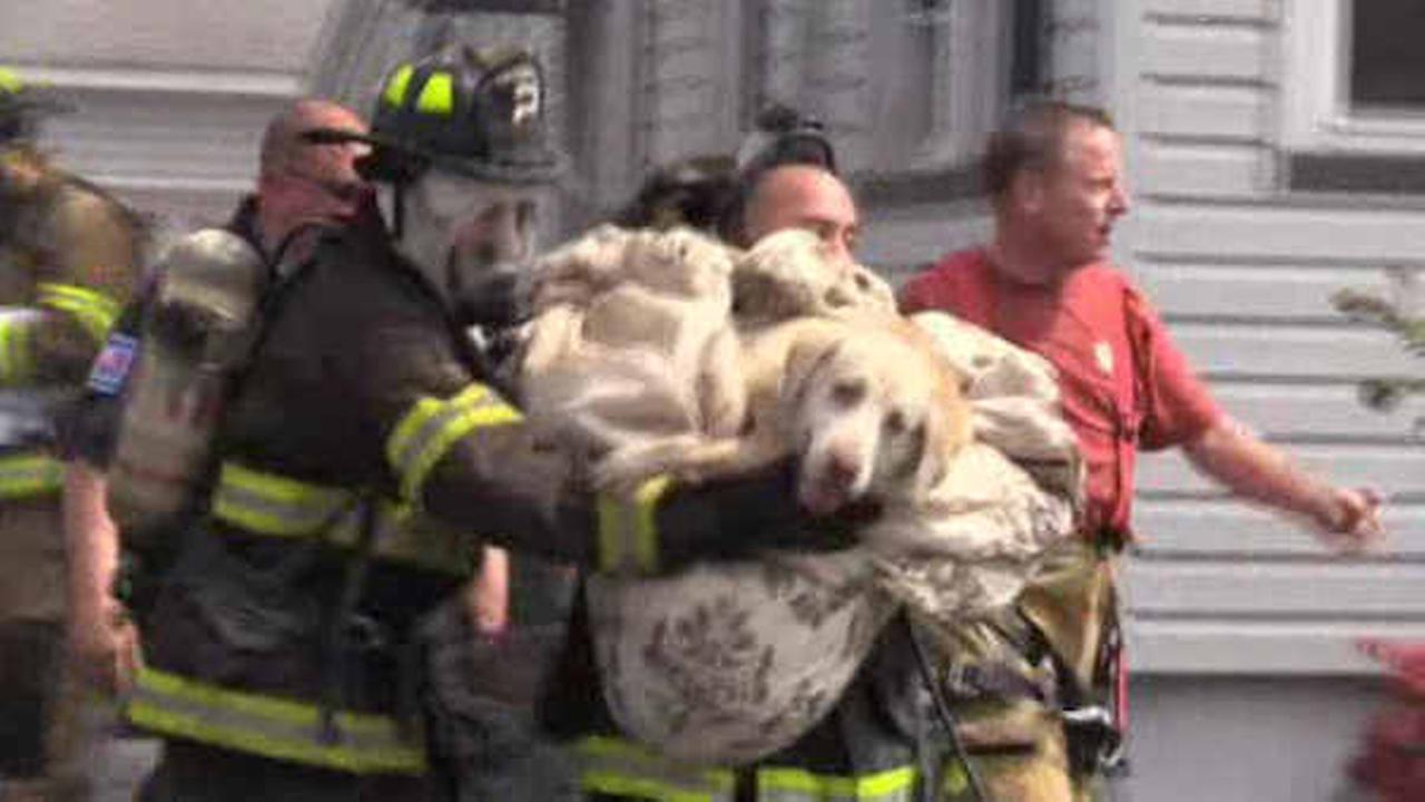 Firefighters rescue dog from burning building in Totowa