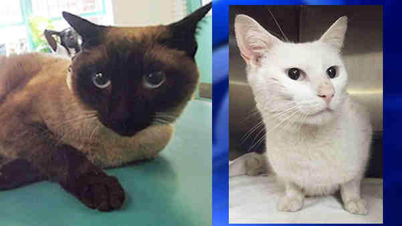 In New Jersey, cats found thrown from window, brutally kicked