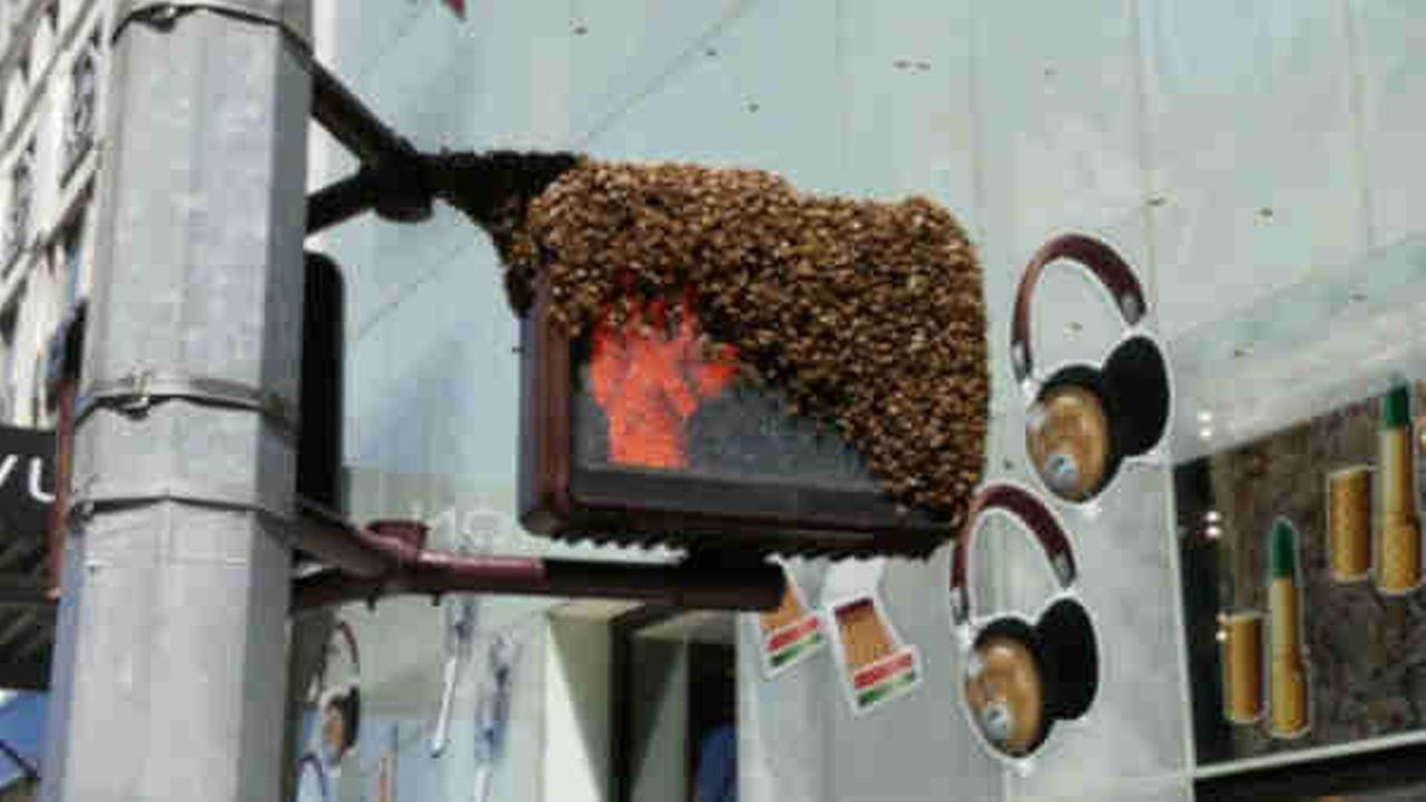 Approximately 30,000 bees removed from Midtown crosswalk light