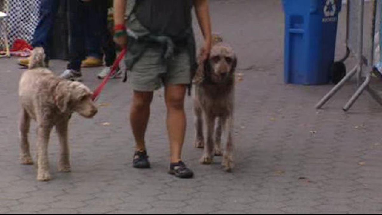 Bill allowing outdoor dining with dogs passes New York Legislature