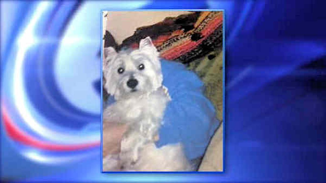 New Jersey groomer issued summonses after dog ends up paralyzed and dies
