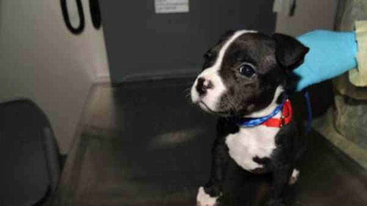 Reward offered after dog abandoned in Brooklyn trash can