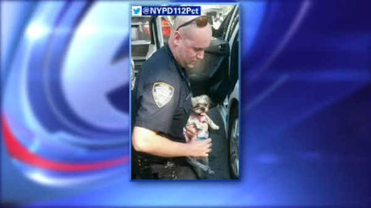 NYPD rescues dog left in hot car for more than an hour in Queens