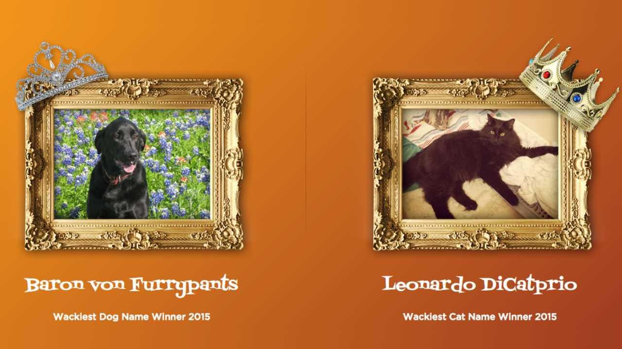 WHAT?!? 'Artoo Dogtoo' and 'Leonardo DiCatprio' among wackiest pet names of 2015