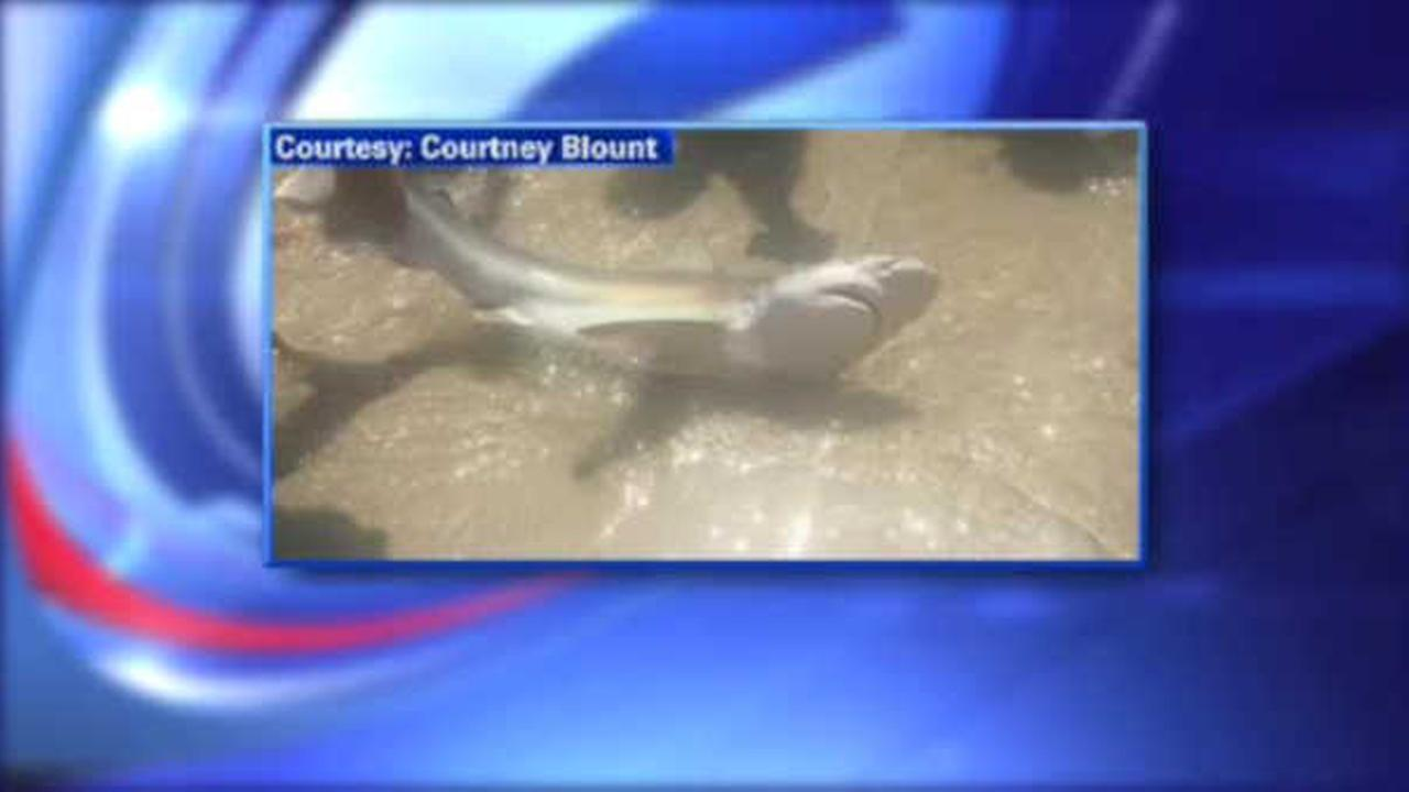 SHARK SIGHTING: Long Beach fisherman catches several sharks