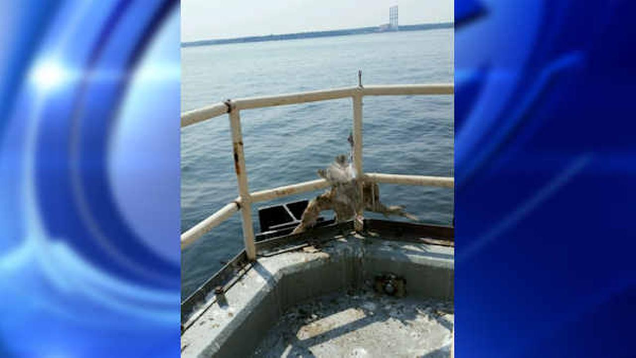 Suffolk County officers rescue bird entangled in string on fuel platform