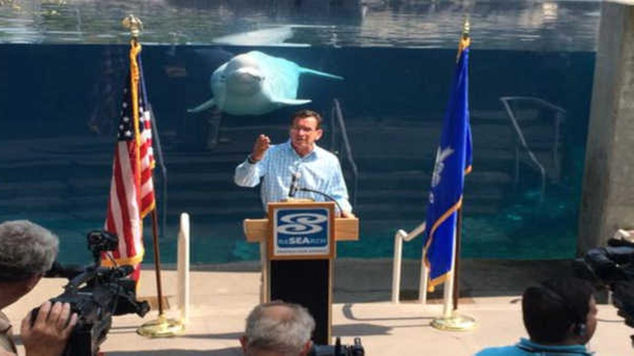 Photobombed! CT Governor Malloy upstaged by beluga whale during press conference