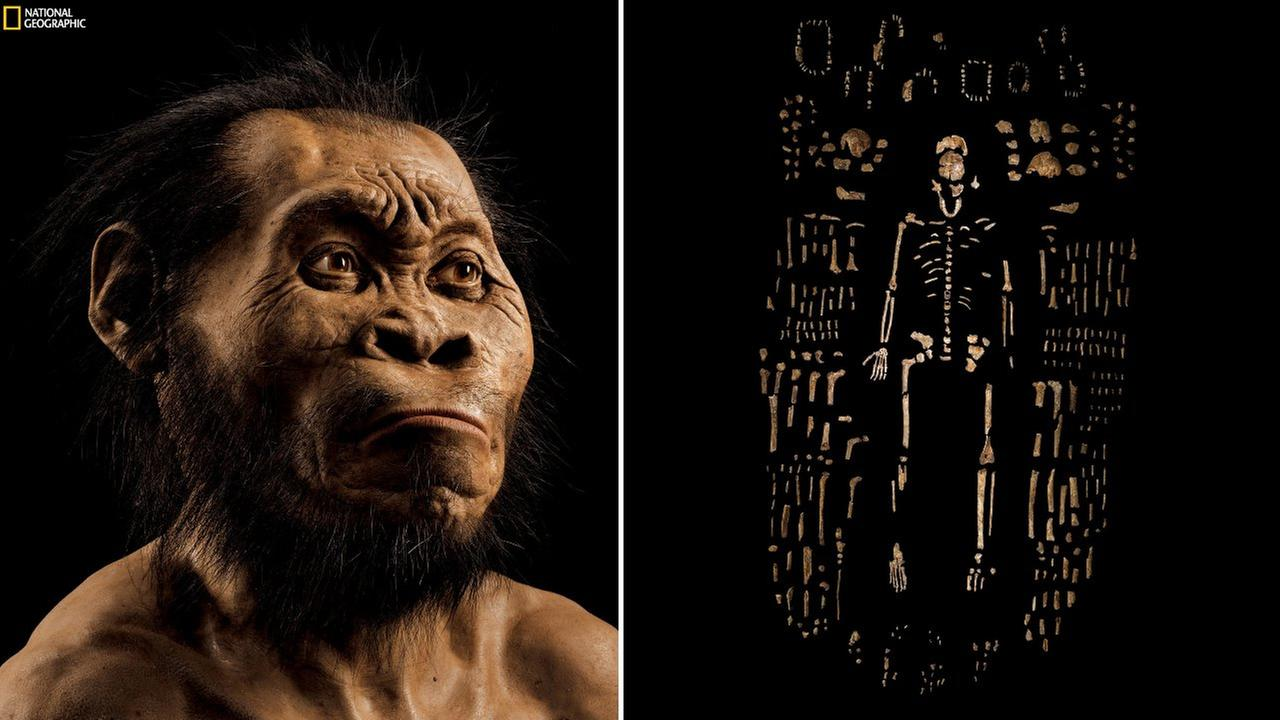 his March 2015 photo provided by National Geographic from their October 2015 issue shows a reconstruction of Homo naledis face by paleoartist John Gurche at his studio.
