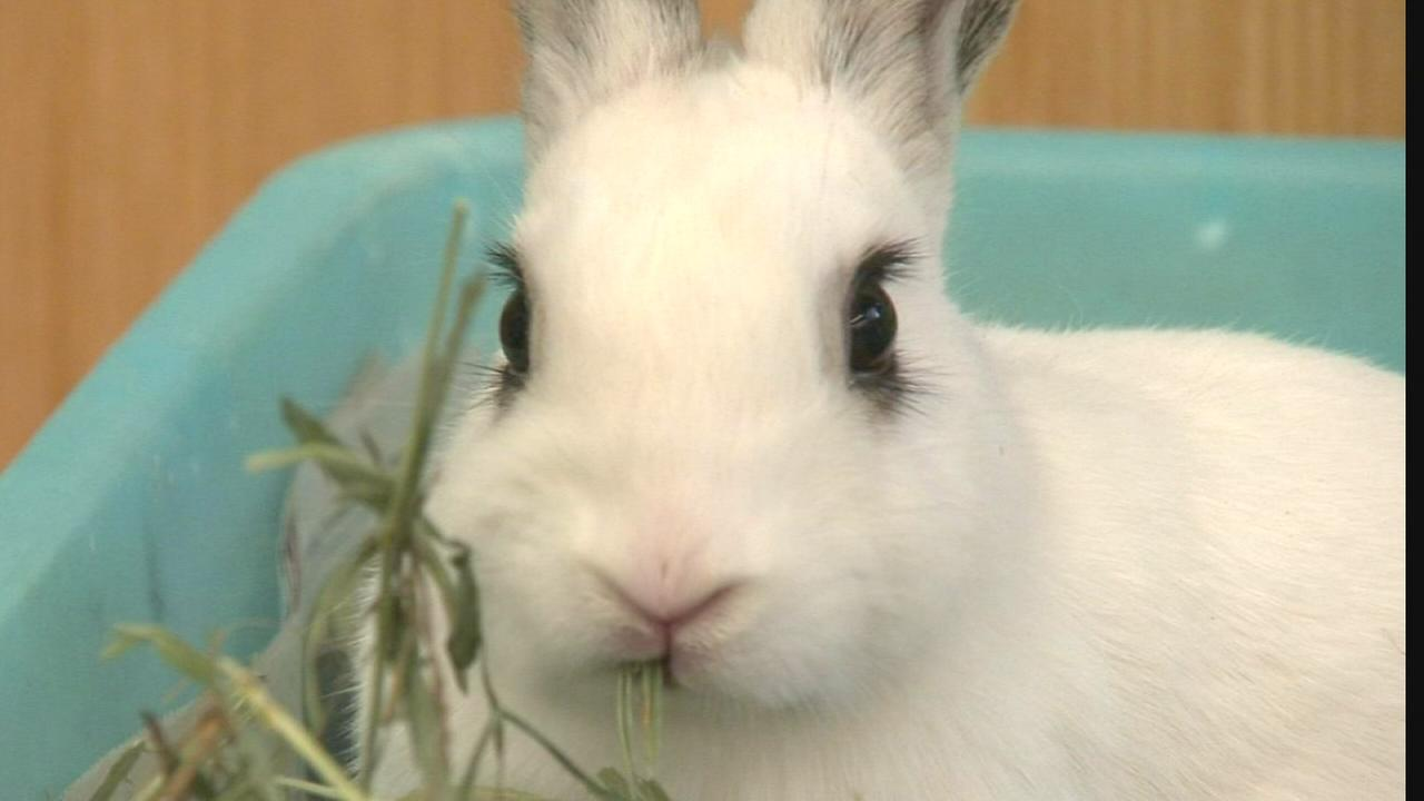 Ready for a pet rabbit? Check this out first