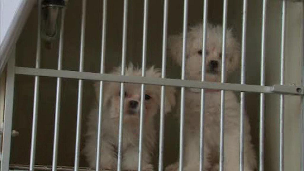 Pet store Just Pups to close after 67 puppies found in van