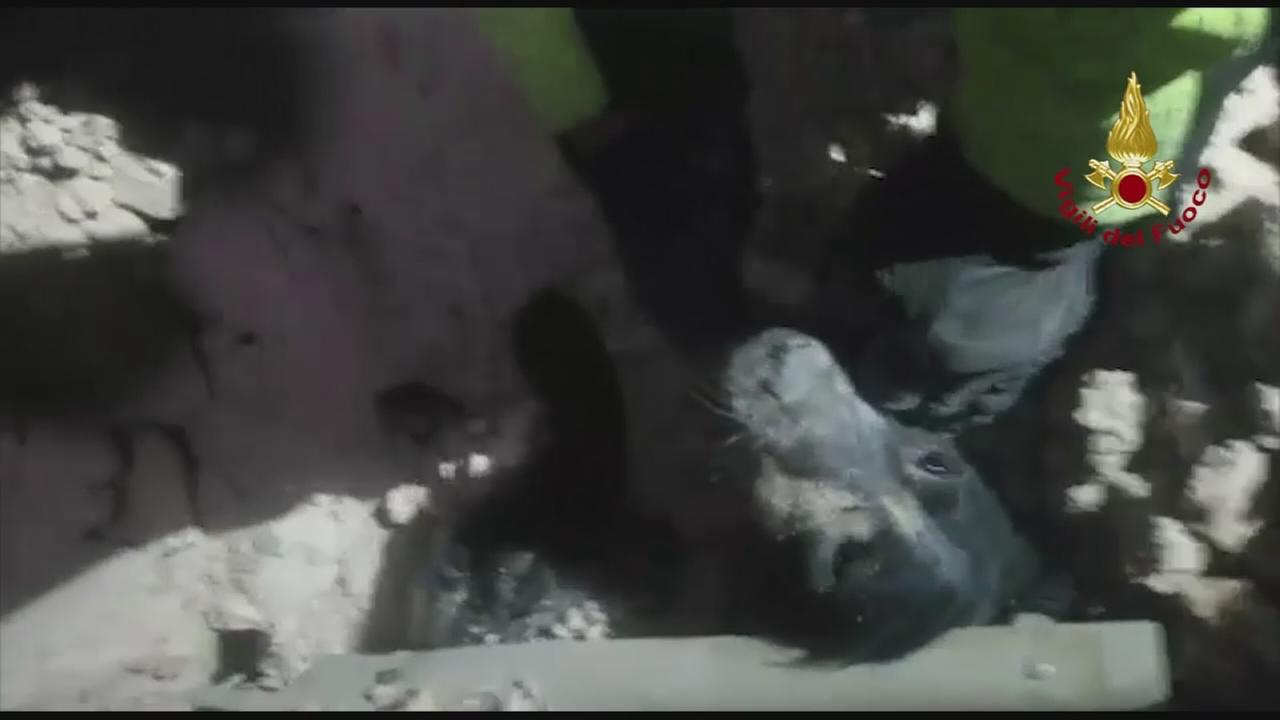 Dog rescued from rubble in Italy