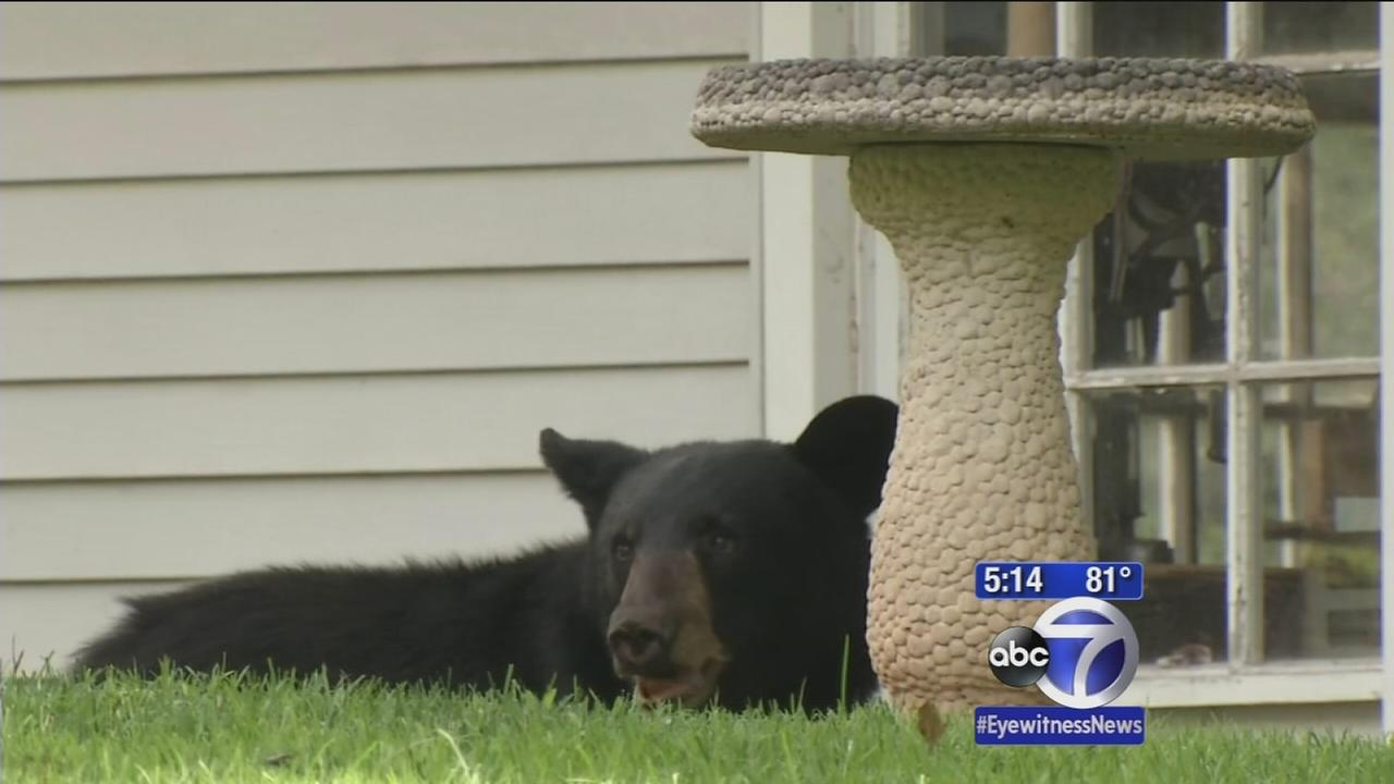 Two bears on the loose in neighboring communities