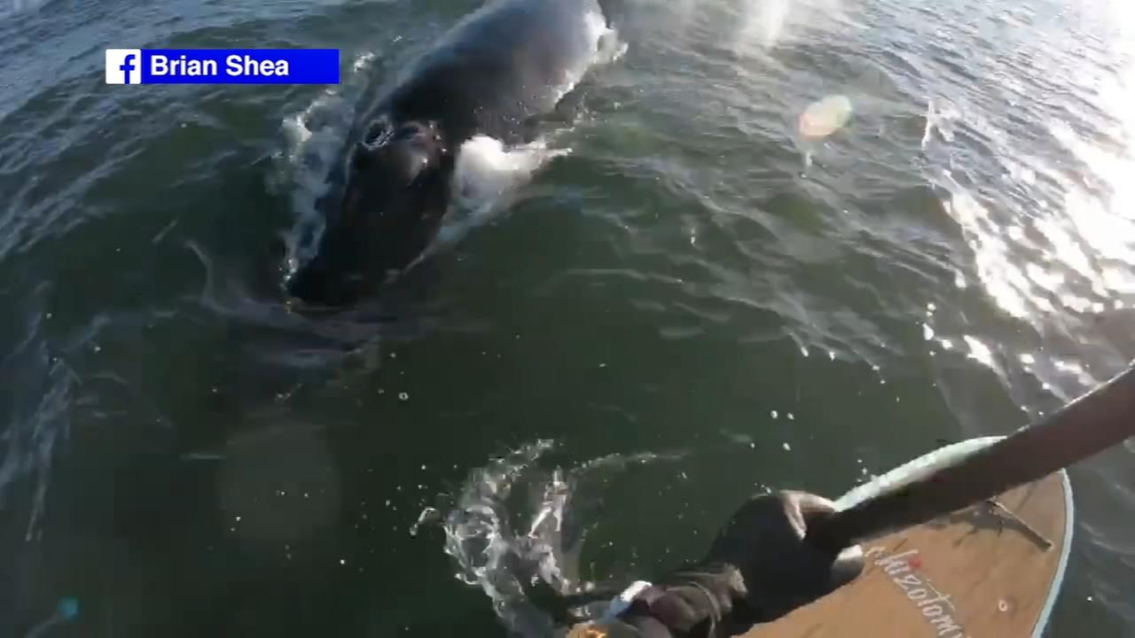 Video shows close encounter with a whale