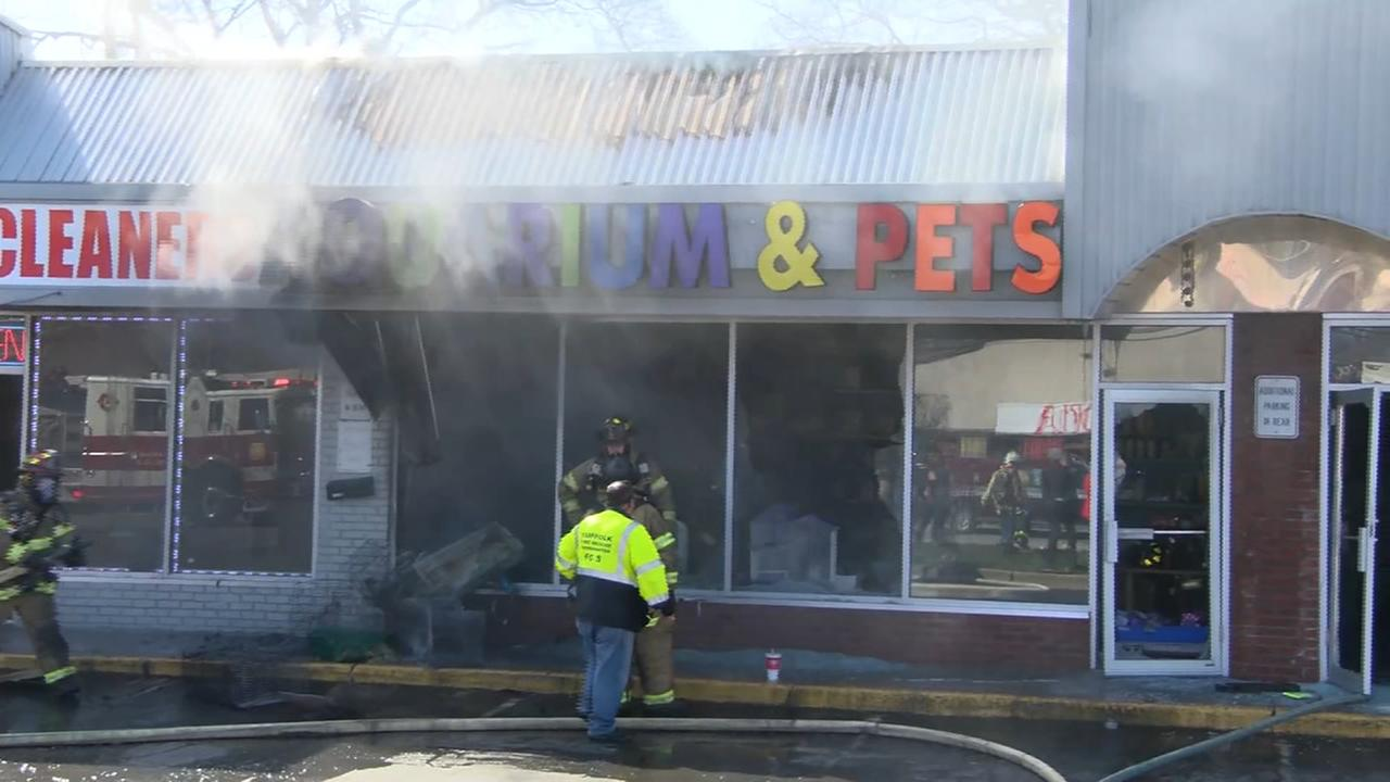 Animals rescued during Long Island pet store fire