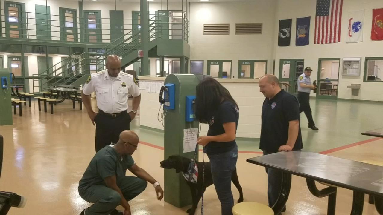 Incarcerated LI vet to train service dog