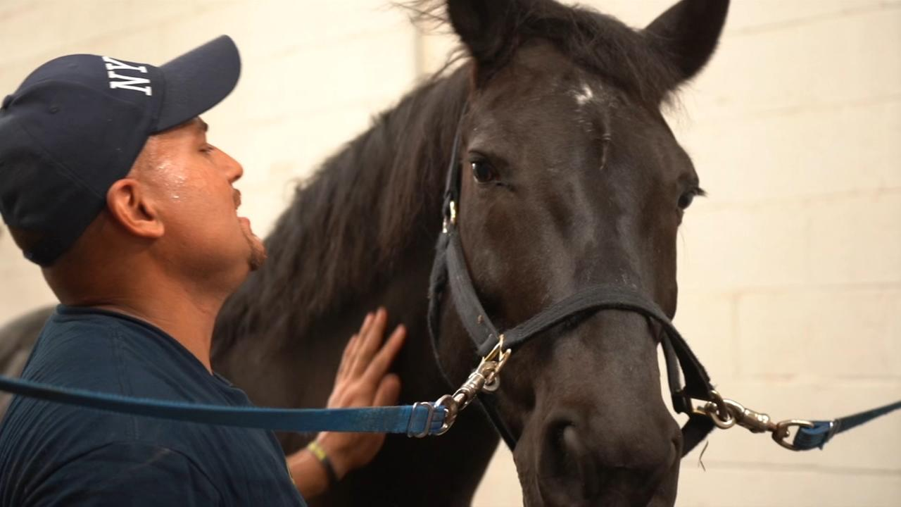 Three farriers care for 50 horses in NYPDs mounted horse unit