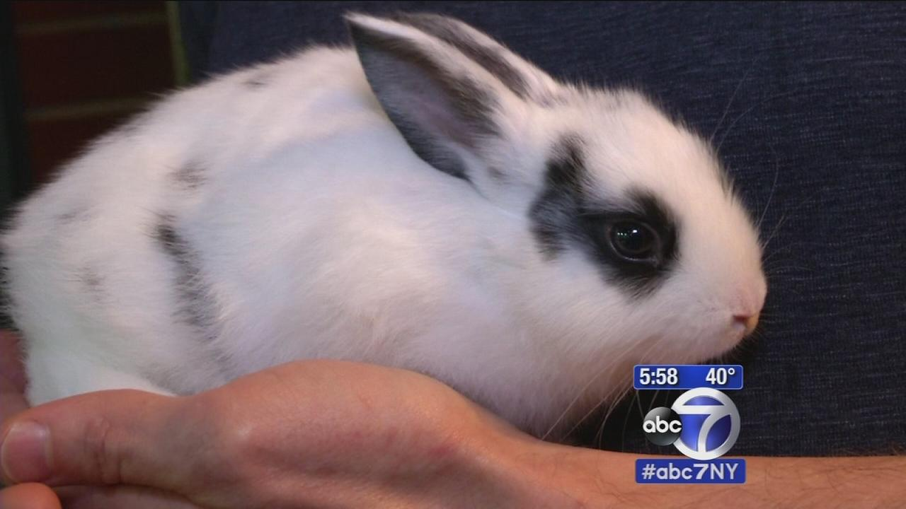 New bill proposal to ban sale of bunnies in New York City