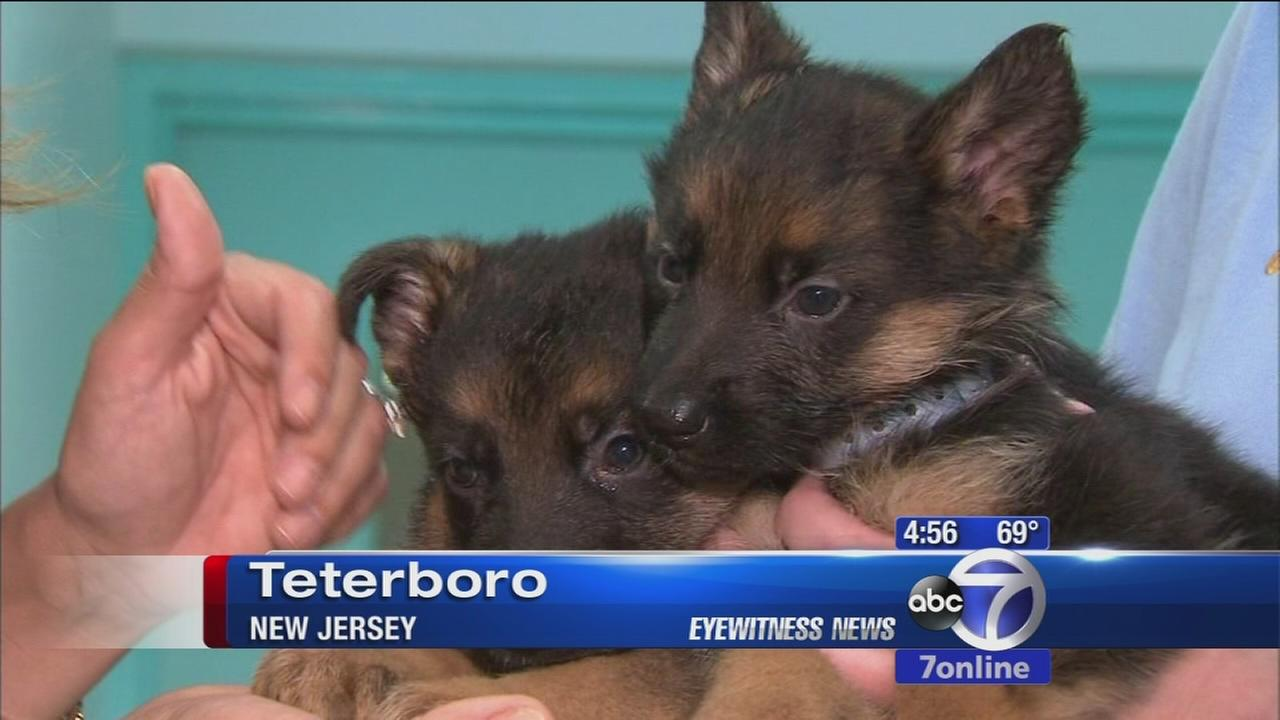 Mistreated dogs rescued in Ridgefield Park