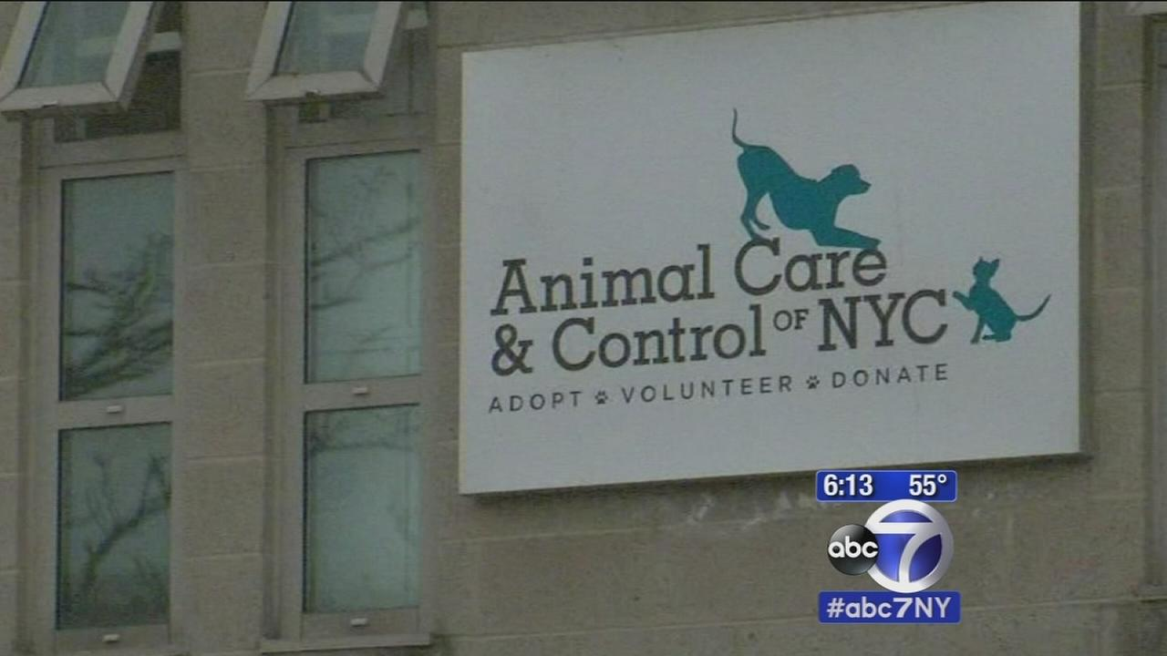 Are NYCs overcrowded animal shelters breeding abuse?