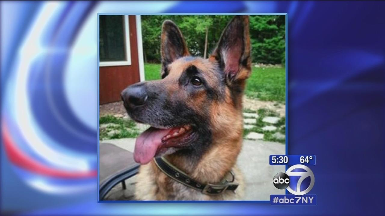 Wyckoff police officer fatally shoots dog