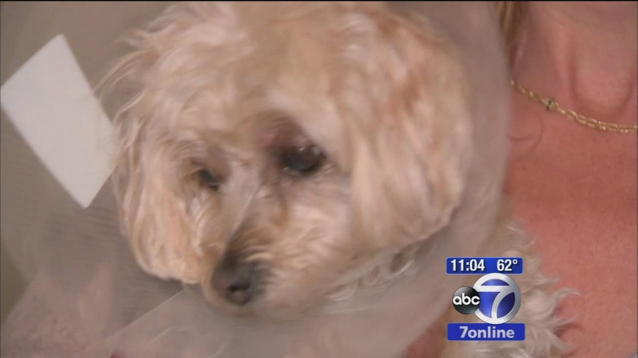 Small dog attacked by coyote in Saddle River