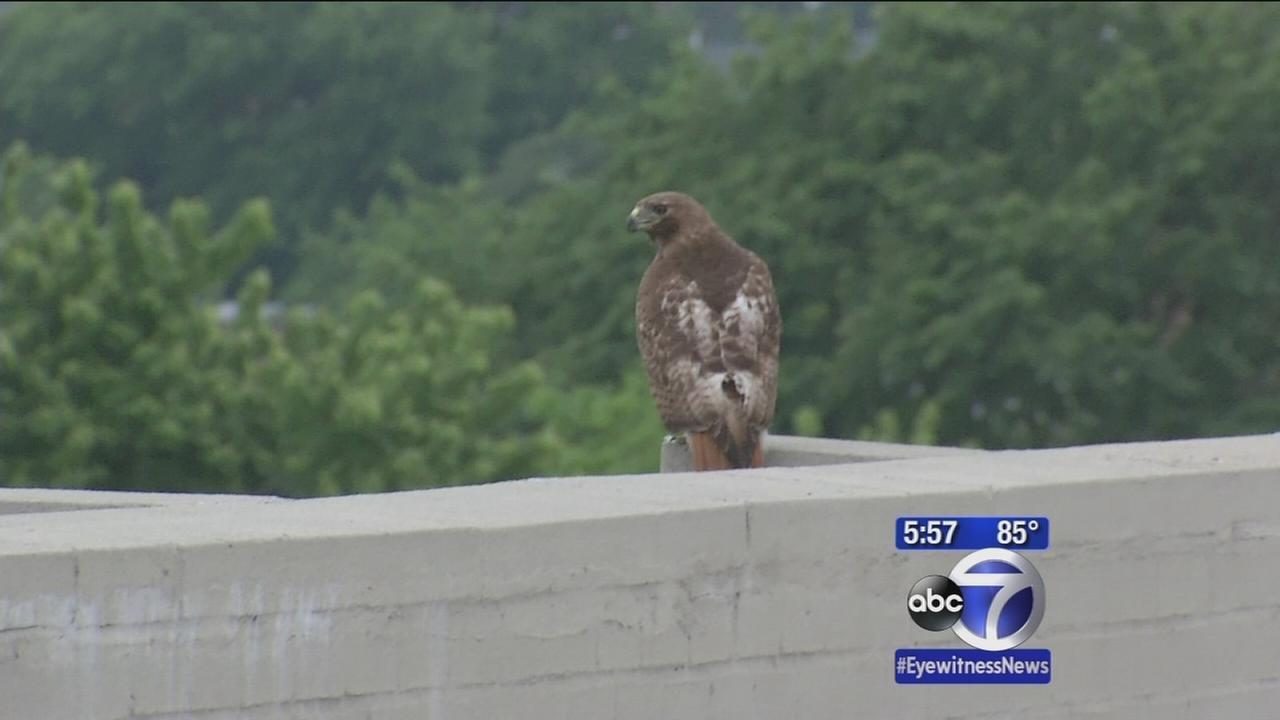 The Birds comes to life in Bedford-Stuyvesant