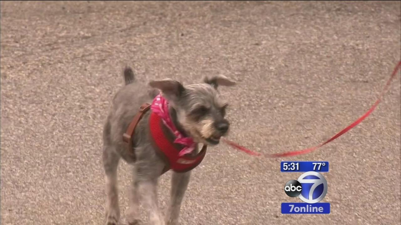 Roxy the dog gets a new home, lease on life after getting adopted