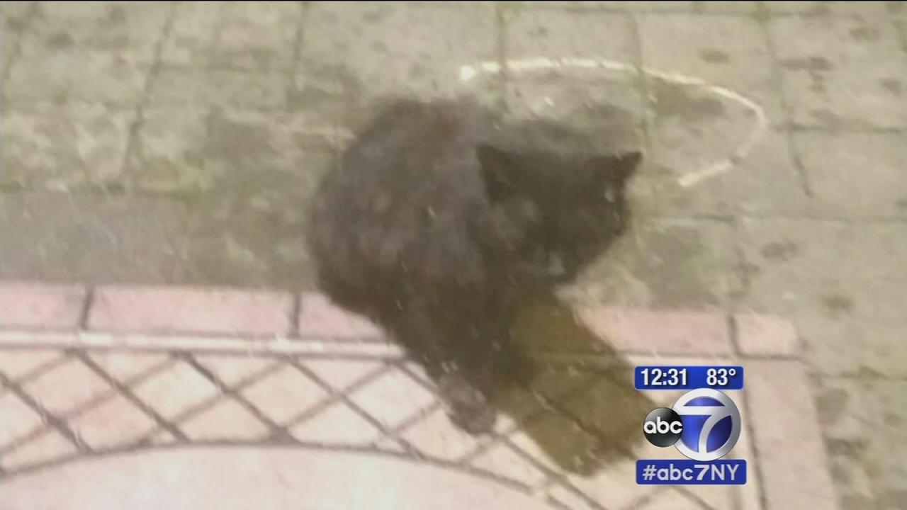 Cat attacks at least two people in Rockland County