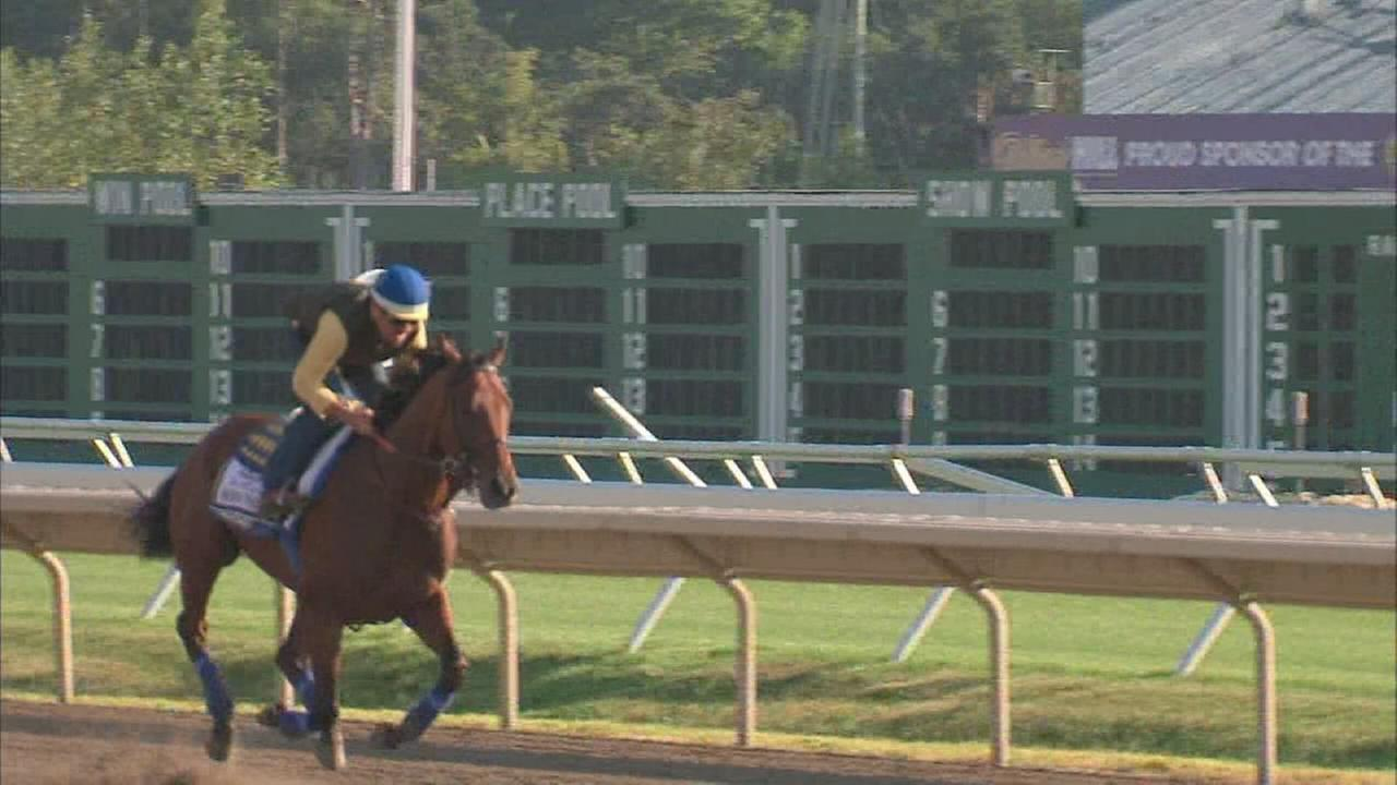 American Pharoah workout Saturday morning