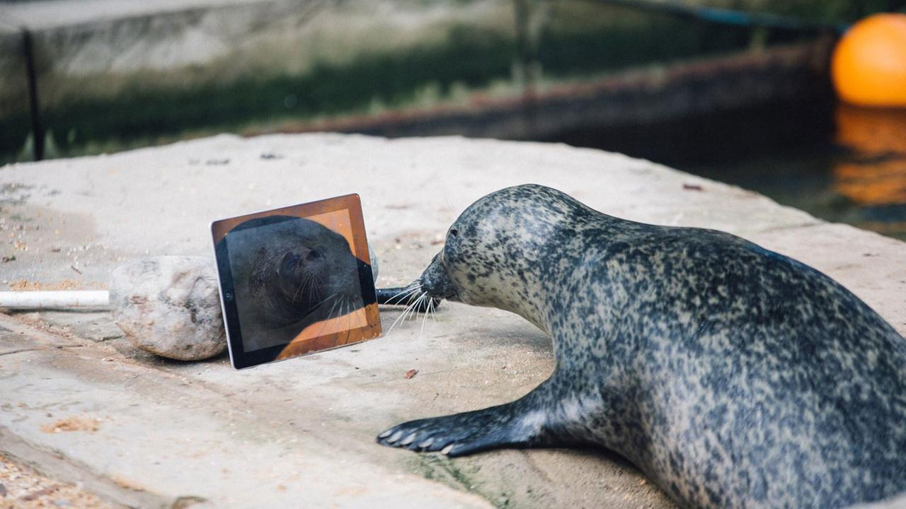 Seals Sija and Babyface video chat each other with Seal Time to keep in touch after being separated.