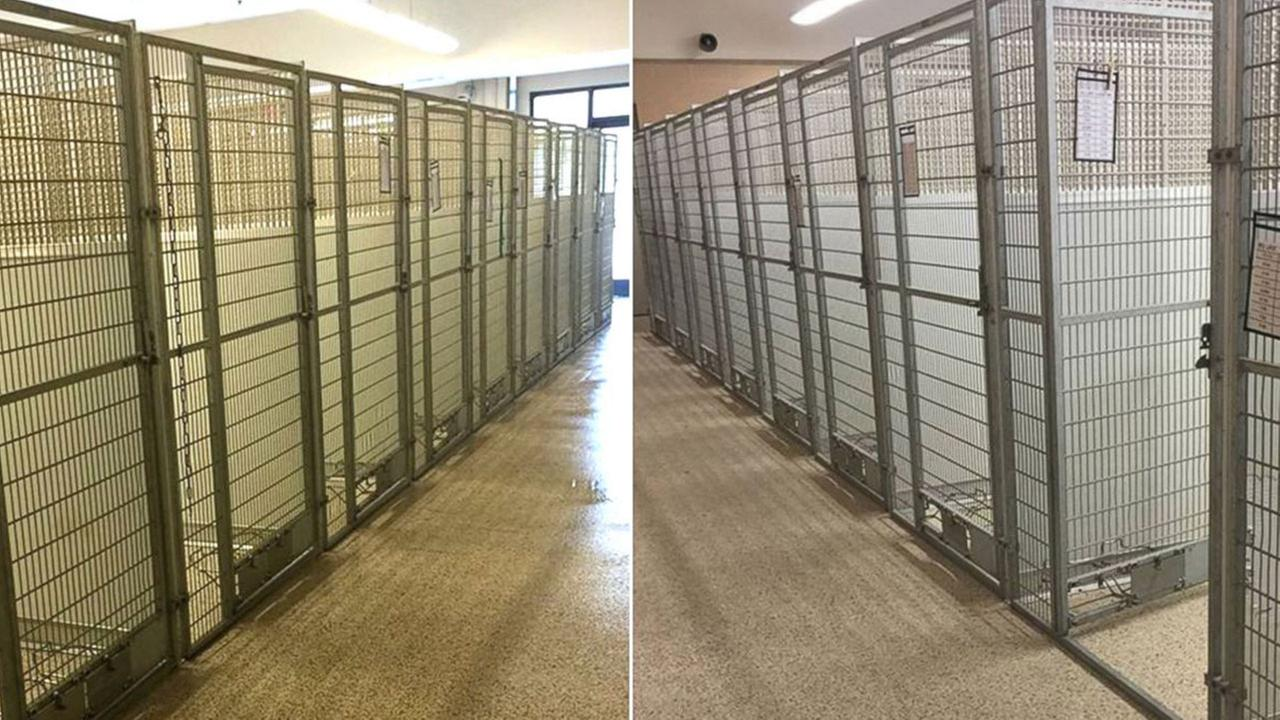 Animal shelter adopts out every single animal in its facility
