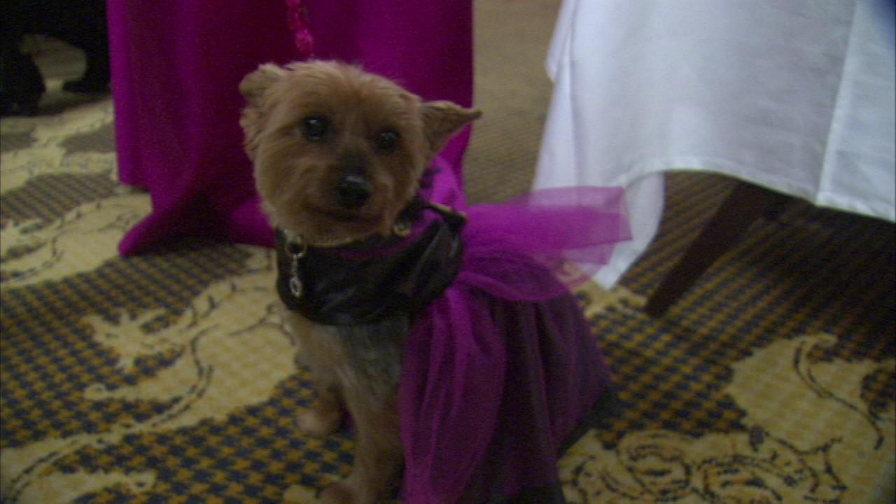 Some pets got a formal night out at the 14th annual PAWS Chicago Fur Ball.