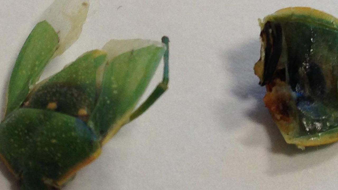 Jessica Mills says she made an unwelcome discovery after she bit into what she thinks is a cicada while eating her lunch.