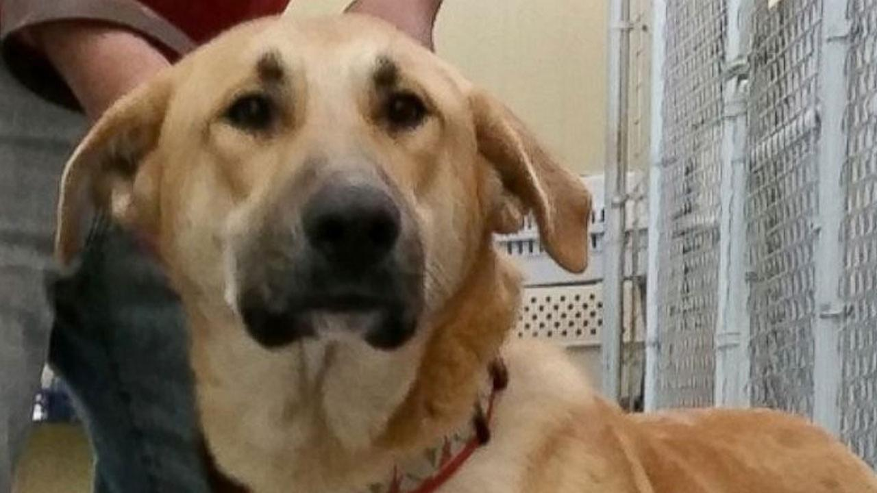 Animal shelter writes scathing letter to people who abandoned dog